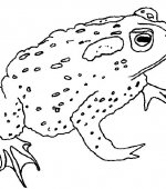 coloriage grenouille 018