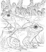 coloriage grenouille 019