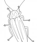 coloriage insectes 001