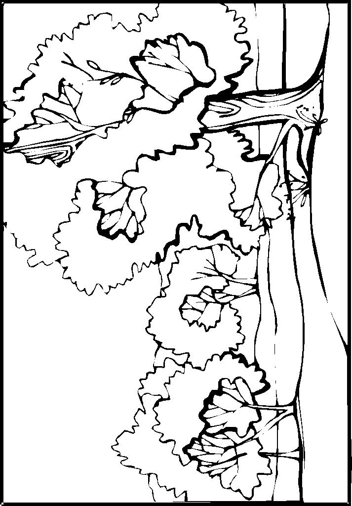 coloriage paysage 00